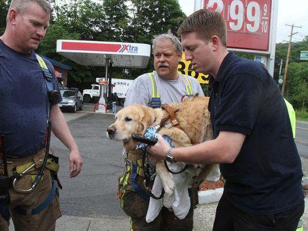 Figo saved his blind owner